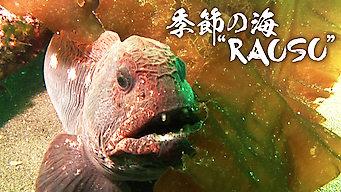 """季節の海""""RAUSU"""""""