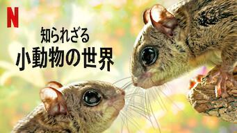 知られざる小動物の世界